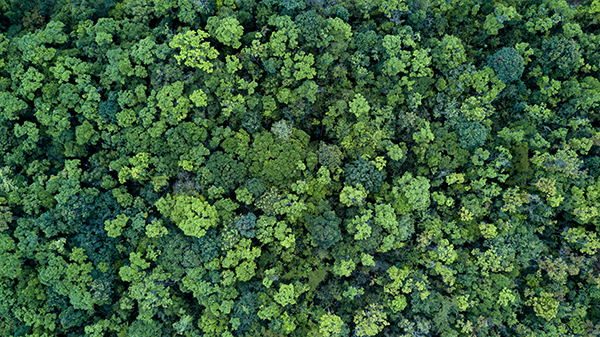 Reforestation: More Than Planting Trees